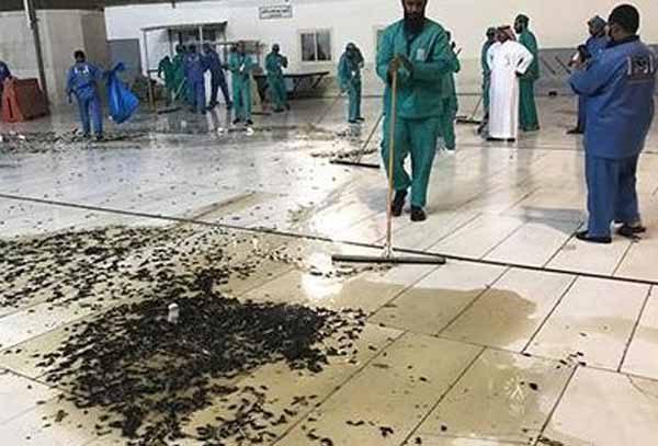 Des millions de CAFARDS découverts à la Mecque