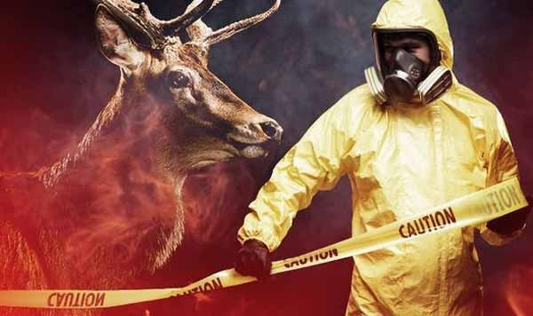 """La maladie mortelle du cerf """"ZOMBIE"""" : L'épidémie pourrait se propager aux Humains"""