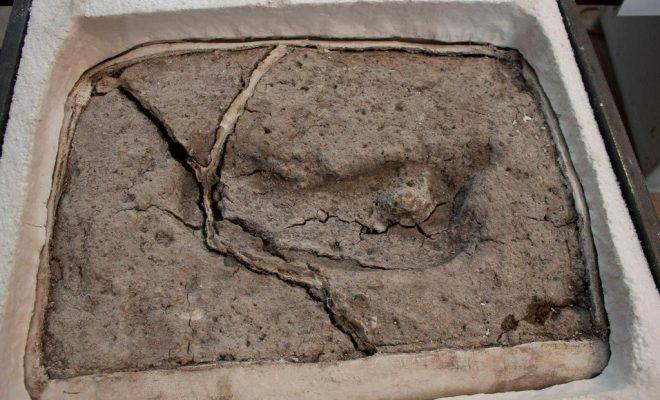 L'empreinte humaine la plus ancienne d'Amérique découverte au Chili