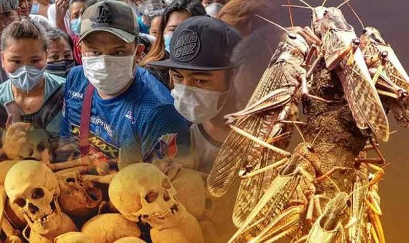 Le coronavirus et le fléau des criquets en Afrique, est-ce une apocalypse biblique?