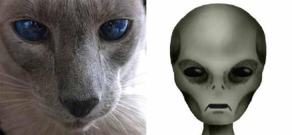 Les chats sont-ils des espions extraterrestres ?