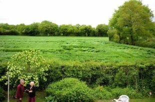 Des crop circles découverts dans un champ près de Lurcy-Lévis